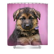 Pretty Puppy In Pink Shower Curtain