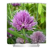 Pretty Purple Chive Flower Shower Curtain