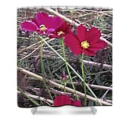 Pretty Red And Yellow Flowers In The Twigs Shower Curtain