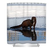 Pretty Reflecting Mink Shower Curtain