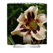 Pretty Single Blooming Daylily In A Garden Shower Curtain