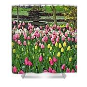 Pretty Tulips Garden Shower Curtain