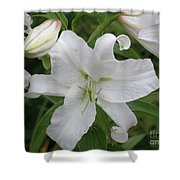 Pretty White Lilies Blooming In A Garden Shower Curtain