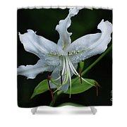Pretty White Stargazer Lily Flower Blossom Shower Curtain