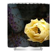 Prickly Bee Shower Curtain