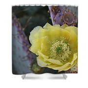 Prickly Blossom Shower Curtain