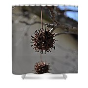 Prickly Liquidamber Pod Shower Curtain