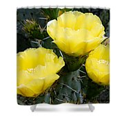 Prickly Pear Cactus Blossoms Shower Curtain