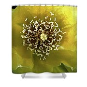 Prickly Pear Cactus Flower Shower Curtain