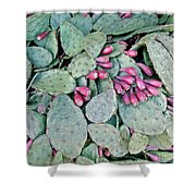 Prickly Pear Cactus Fruits Shower Curtain