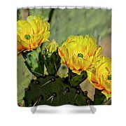 Prickly Pear Flowers H42 Shower Curtain