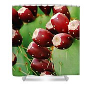 Prickly Pear Fruit Shower Curtain