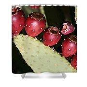 Prickly Pear-jerome Arizona Shower Curtain