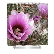 Prickly Petals Shower Curtain