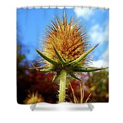 Prickly Thistle Shower Curtain
