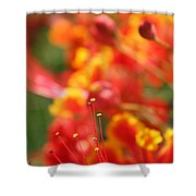 Pride Of Barbados Shower Curtain