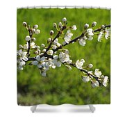 Pride Of The Hedgerow Shower Curtain