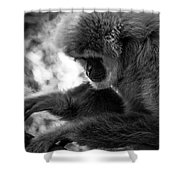 Primate 1 Shower Curtain