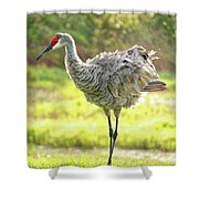 Primping Sandhill Crane Shower Curtain