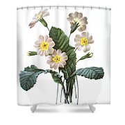 Primrose (primula Aucalis) Shower Curtain
