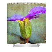 Primrose Shower Curtain