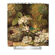 Primroses And Bird's Nests On A Mossy Bank Shower Curtain