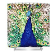 Prince Of The Peacocks Shower Curtain