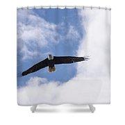 Prince Rupert Eagle Flight Shower Curtain