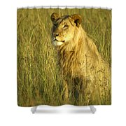Princely Lion Shower Curtain