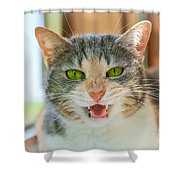 Priscilla A Cat Of My Mother Shower Curtain
