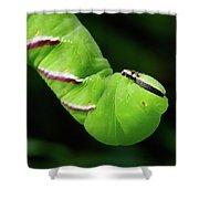 Privet Hawk Moth Caterpillar Shower Curtain