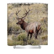 Prize Bull Elk Shower Curtain