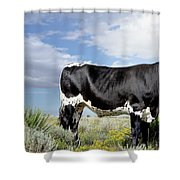 Prized Heiffer, Ojo De La Vaca, New Mexico, August 30, 2016 Shower Curtain