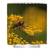 Proboscis Shower Curtain