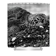 Profile Hawaiian Sea Turtle Bw Shower Curtain