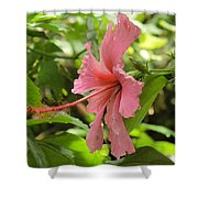 Profile Hibiscus Shower Curtain