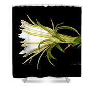 Profile Night Blooming Cereus Shower Curtain