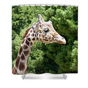 Profile Of A Giraffe Shower Curtain