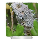 Profile Of A Gray Iguana In The Top Of A Bush Shower Curtain