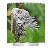 Profile Of A Gray Iguana Perched In A Bush Shower Curtain