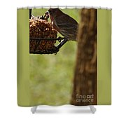 Profile Of A Male House Finch Shower Curtain