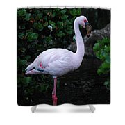 Profile Of A Pink Lesser Flamingo Shower Curtain