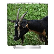 Profile Of A Pygmy Goat In A Farm Field Shower Curtain