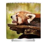 Profile Of A Red Panda Shower Curtain