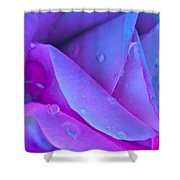 Profile Of A Rose Shower Curtain