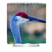 Profile Of A Sandhill Shower Curtain