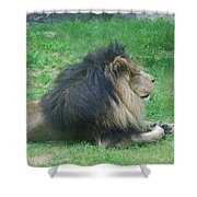Profile Of A Sleeping Lion In Grass Shower Curtain