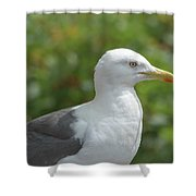 Profile Of Adult Seagull Shower Curtain