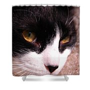 Profile Of Paws Shower Curtain