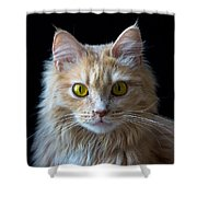 Profile Photo Shower Curtain